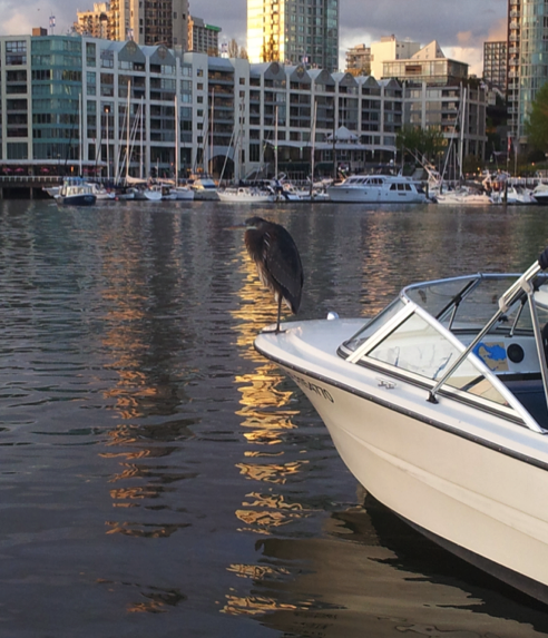 Resting on our 17ft boat false creek