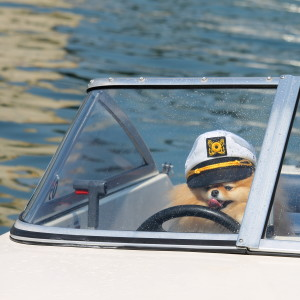 Pickles captains the boat for the day