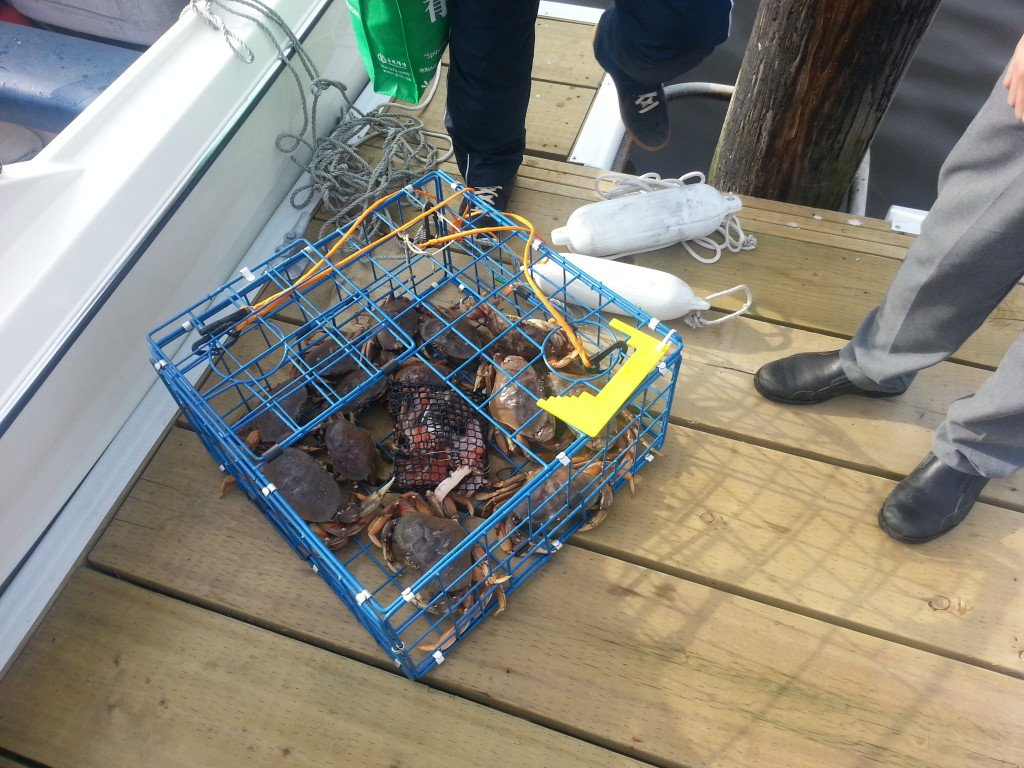 crabbing caught for the day