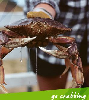 Go crabbing in Vancouver